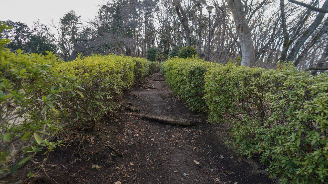 湘南平 子供の森 散歩