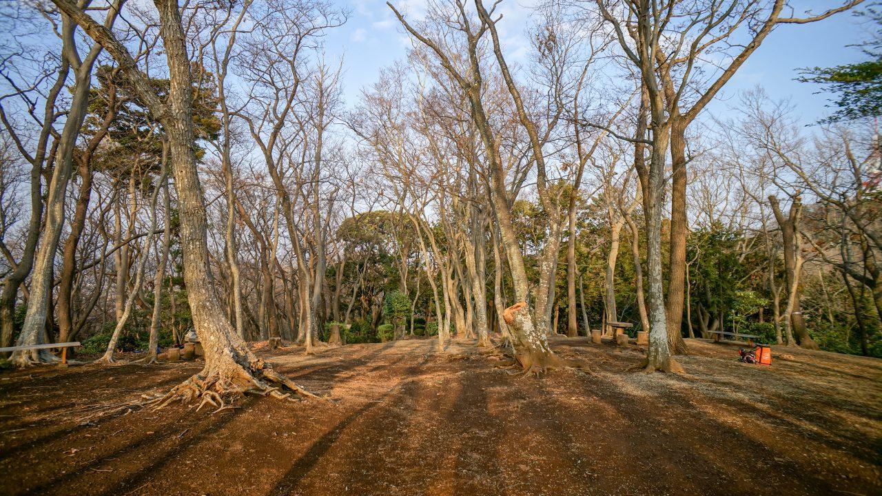 湘南平 子供の森 散歩1