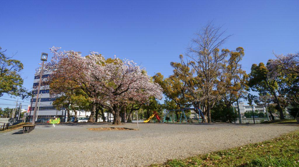 八幡山 広場