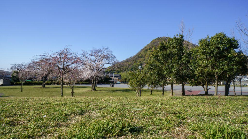 桜ヶ丘公園 広場