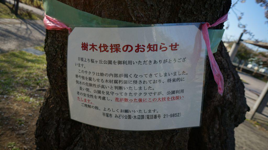 桜ヶ丘公園 お知らせ