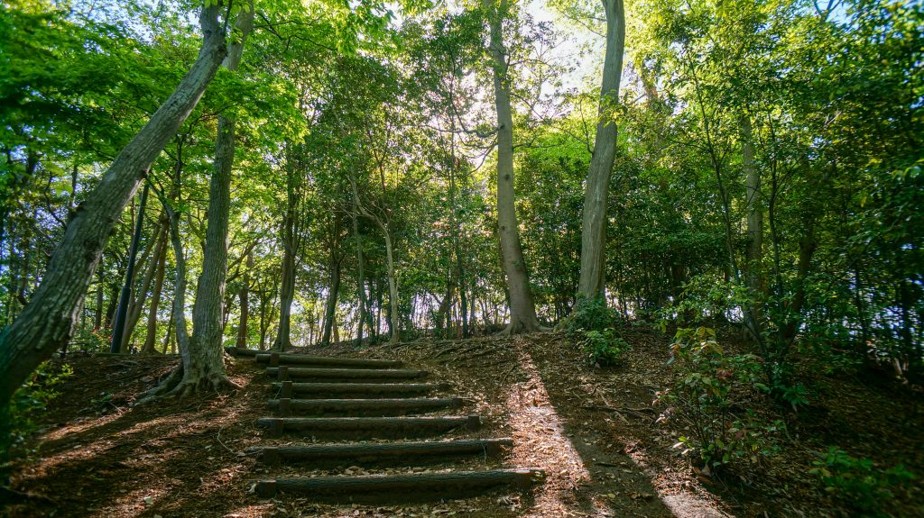 めぐみが丘 秘密の森2