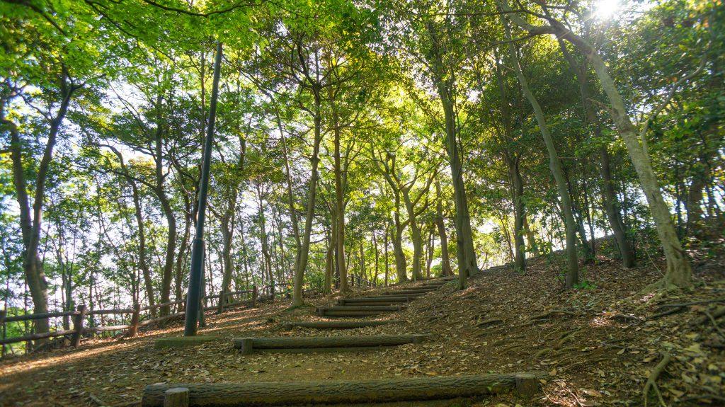 めぐみが丘 秘密の森3